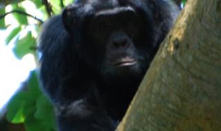 5 Days Gorilla & Chimps Trek