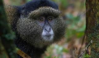 10 Days Gorilla Trek Uganda Rwanda