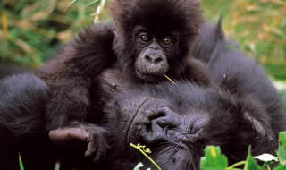 4 Days Double Gorilla Safari